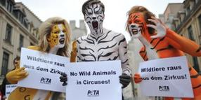 "Foto: Protestaktion der Organisation ""PETA"" gegen Wildtierhaltung in Zoos."