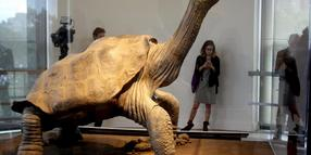 Lonesome George in New York.