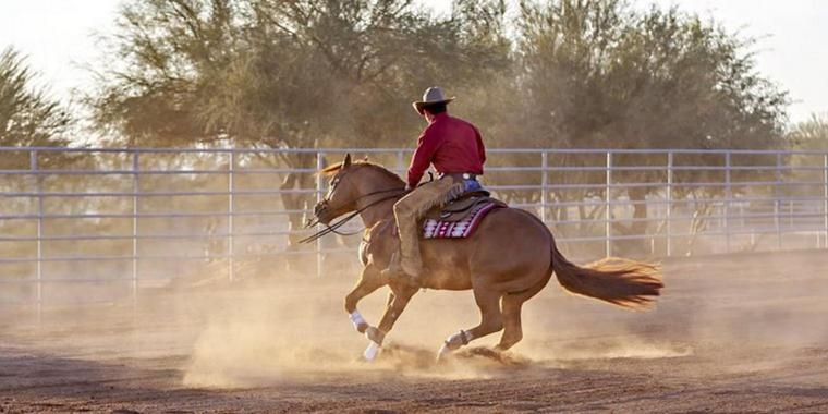 Foto: Reining Horse Spin.