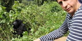 Thorsten Wolf mit Gorilla im Bwindi-Nationalpark in West-Uganda