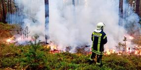 Waldbrand in Neuholland