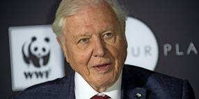 Sir David Attenborough bringt ein Album heraus.